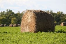 Hay Bails Royalty Free Stock Photos