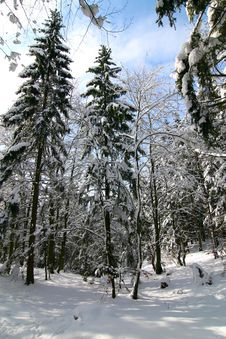 Winter In The Forrest Royalty Free Stock Images