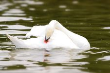 Free Swan Stock Photography - 6417612
