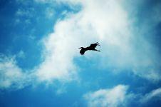 Free Crane Stock Image - 6417701