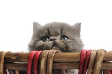 Free Little Persian Kitten Stock Images - 6417964
