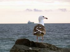 Free Seagull And Boat Stock Photos - 6418613