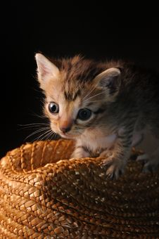 Free Tiny Cat Stock Images - 6418794