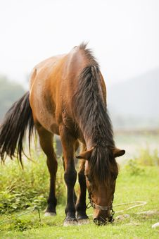 Free Horse Royalty Free Stock Photos - 6419218