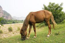 Free Horse Stock Photo - 6419410