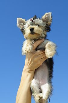 Free Puppy Held Up High Stock Image - 6419641