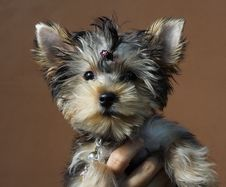 Free Puppy On A Matte Background Stock Image - 6419671