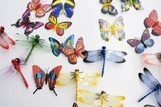 Free Insects Collection Royalty Free Stock Image - 6419986