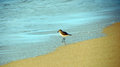 Free A Bird On Beach Royalty Free Stock Image - 64171836