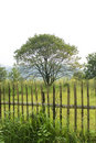 Free Tree With Fencing Stock Photography - 6420552