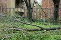 Free Down Trees Stock Photo - 6428370