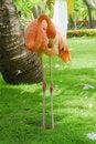 Free Flamingo Stock Images - 6429524