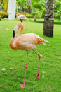 Free Pink Flamingos Royalty Free Stock Photo - 6429555