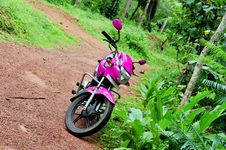 Pink Hero Honda Motor Bike Stock Images