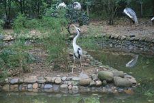 Free China S Hangzhou Zoo_Heron Stock Photos - 6421603