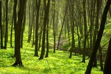 Free Forest Royalty Free Stock Image - 6421726