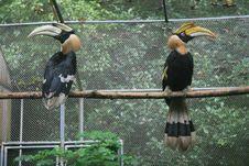 Free China S Hangzhou Zoo_Hornbill Royalty Free Stock Photo - 6421785