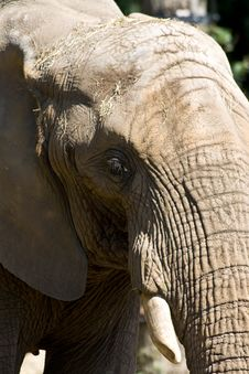 Free Elephant Royalty Free Stock Image - 6422496
