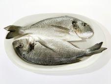 Free Prepared Fish Stock Photo - 6422860
