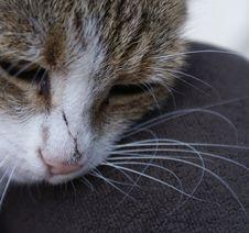 Free Cat Stock Photos - 6422973