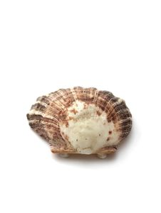 Free Sea Shell Royalty Free Stock Image - 6423646