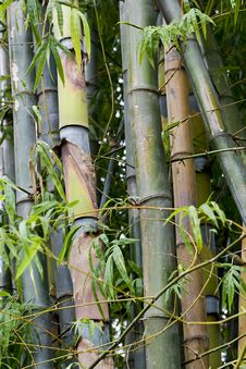 Free Bamboo Woods, Thailand Royalty Free Stock Images - 6423879