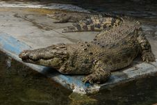 Free Crocodile Farm Stock Photography - 6425292