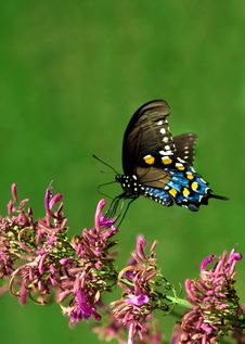 Free Eastern Butterfly Stock Photo - 6425610