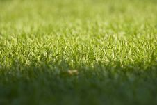 Free Green Grass Series Stock Photo - 6426440
