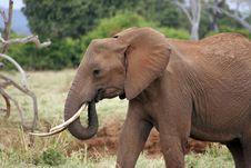 Free Dumbo II Stock Image - 6426481