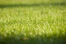 Free Green Grass Series Stock Photos - 6426513