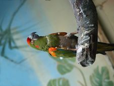Free Green Parrot Stock Image - 6427711