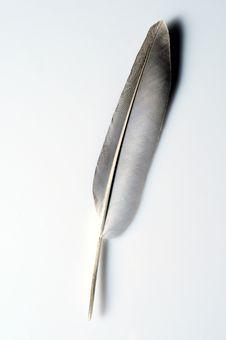 Free Feather Stock Photos - 6429143