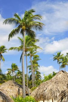 Free Coco Beach Royalty Free Stock Image - 6429436