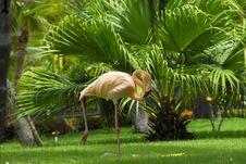 Free Flamingo In The Garden Royalty Free Stock Photo - 6429495