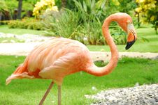 Free Flamingo Profile Royalty Free Stock Images - 6429539