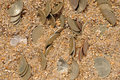 Free Money Coins In The Sand Stock Image - 6431031