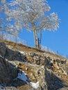 Free Highway Tree Stock Photo - 6433840