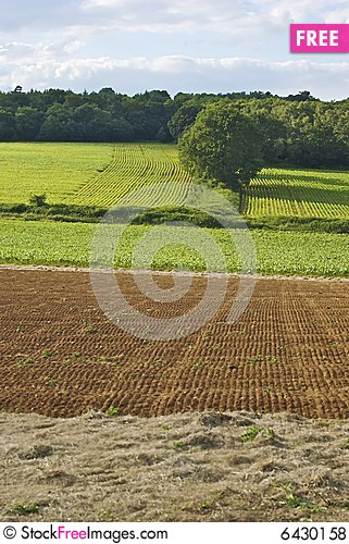 Free Field With Parallel Lines Royalty Free Stock Photos - 6430158
