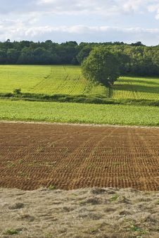 Field With Parallel Lines Royalty Free Stock Photos