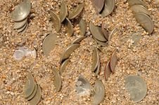 Money Coins In The Sand Stock Image