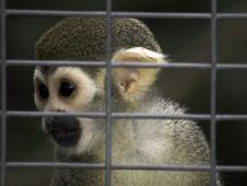Day At The Zoo - Monkey Royalty Free Stock Image
