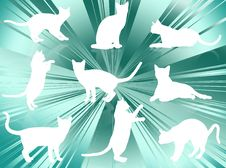 Free Cats Silhouettes Stock Photography - 6432002