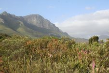 Free Hottentots Holland Mountains Stock Photo - 6432430
