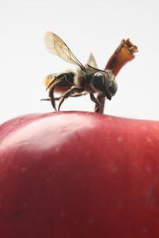Free Wasp Isolated On White Stock Photo - 6433060