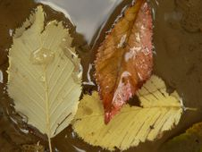 Free Autumn Atmosphere Royalty Free Stock Photo - 6433475