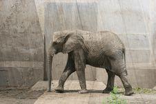 Free African Elephant Royalty Free Stock Photos - 6435048