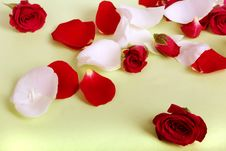Rose Petals And Heads Royalty Free Stock Image