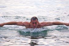 Free Swam Stock Photography - 6435082