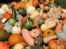 Free Harvest Royalty Free Stock Image - 6435456